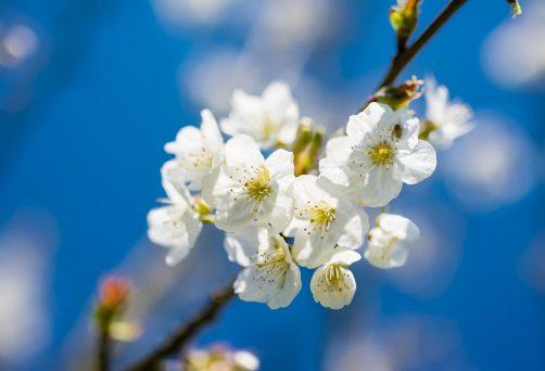 Olá Primavera, com Yoga e Voz